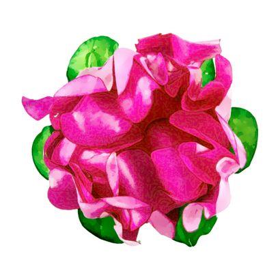 rosa-medio